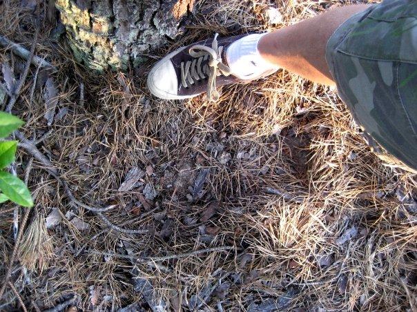 Impression found in Pine Barrens.
