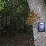 Trail cam deployed in Atlantic White Cedar forest.